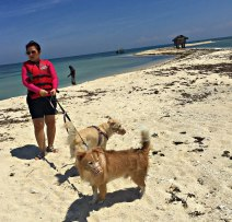 5 Pangasinan with dogs 2